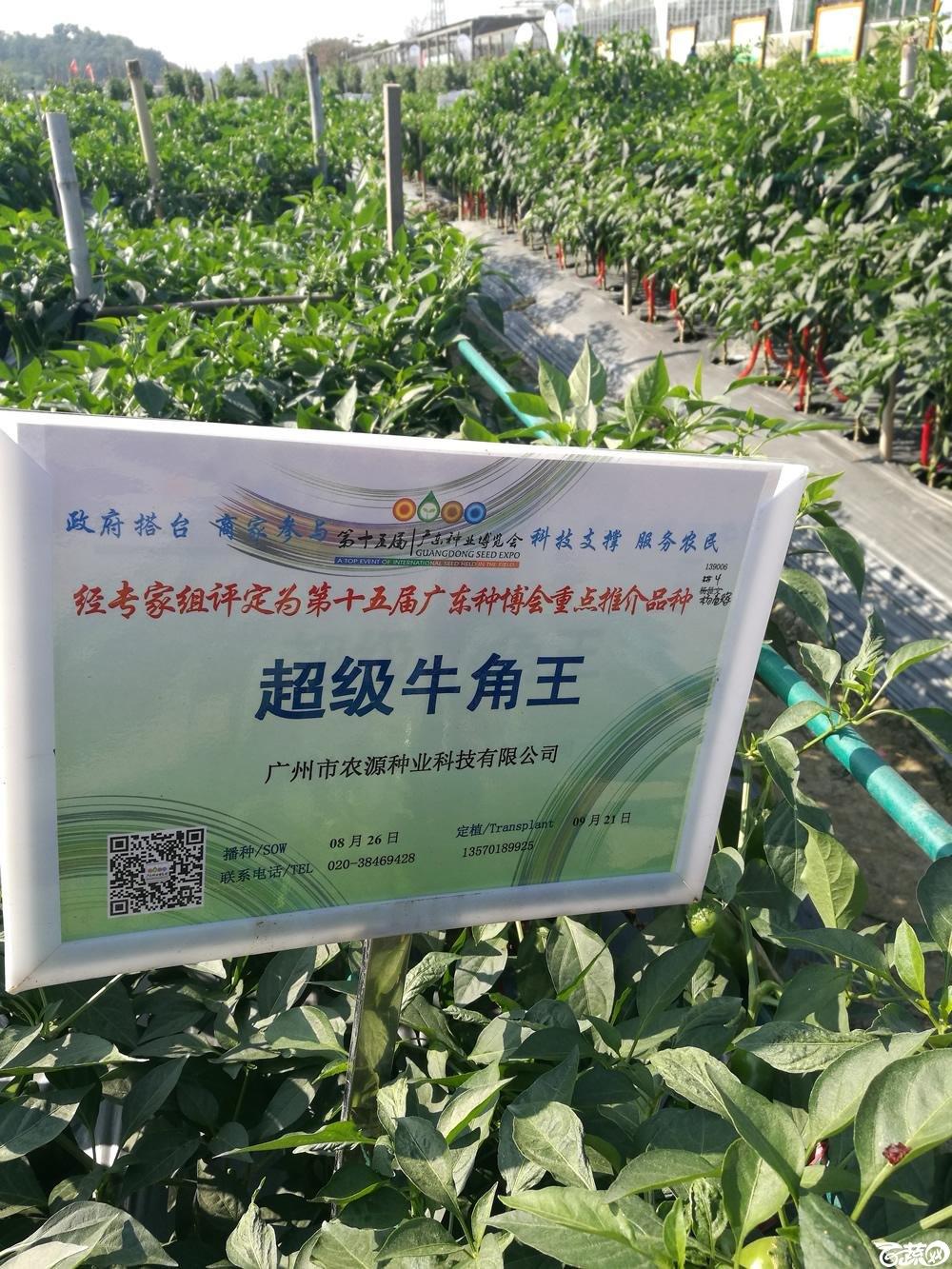 2016年15届广东种博会重点推荐品种,广州农源种业超级牛角椒_001.jpg