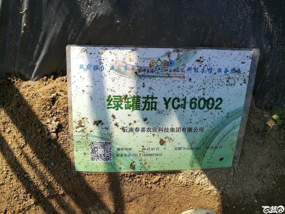 2016年15届广东种博会,云南春喜农业公司绿罐茄YC16002_006.jpg