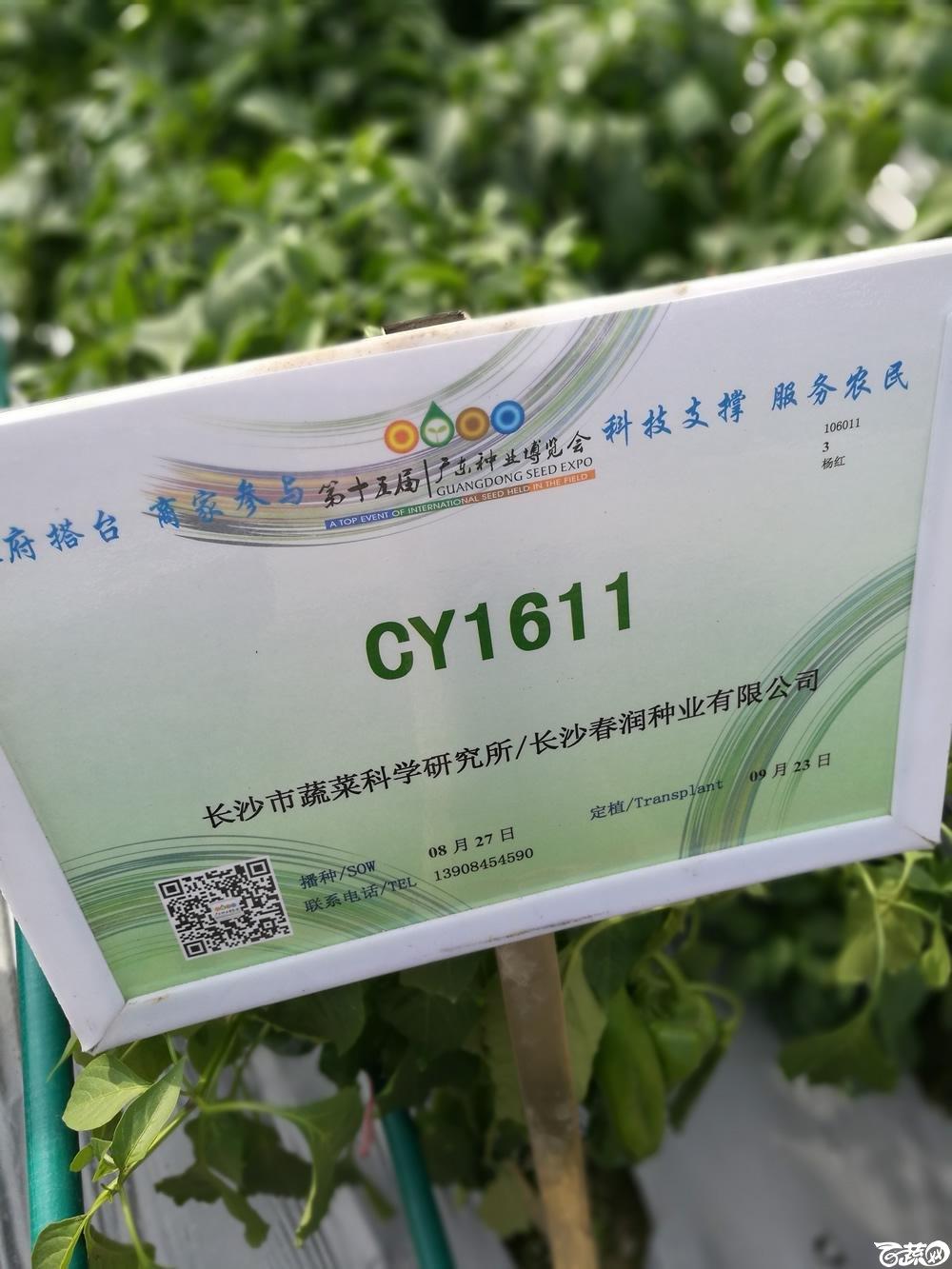 2016年15届广东种博会,长沙市蔬菜所CY1611辣椒_001.jpg