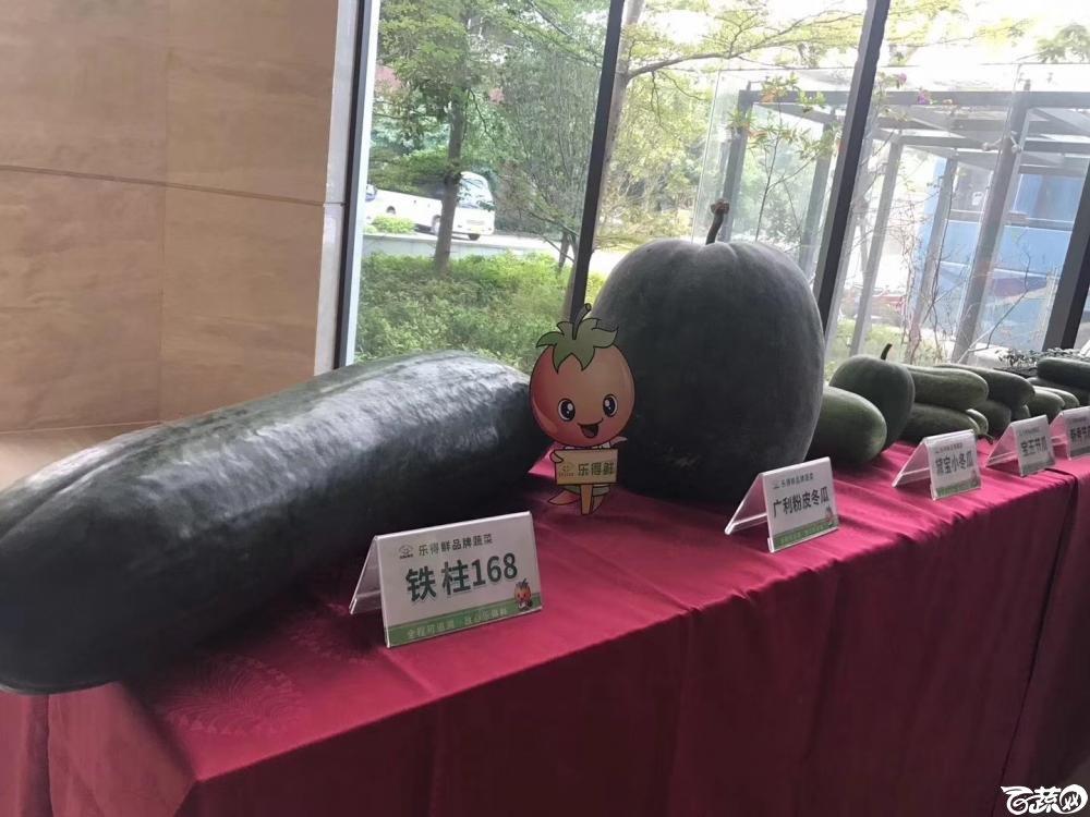 2018梅州蔬菜良种良法展示观摩培训会-瓜类-002.JPG
