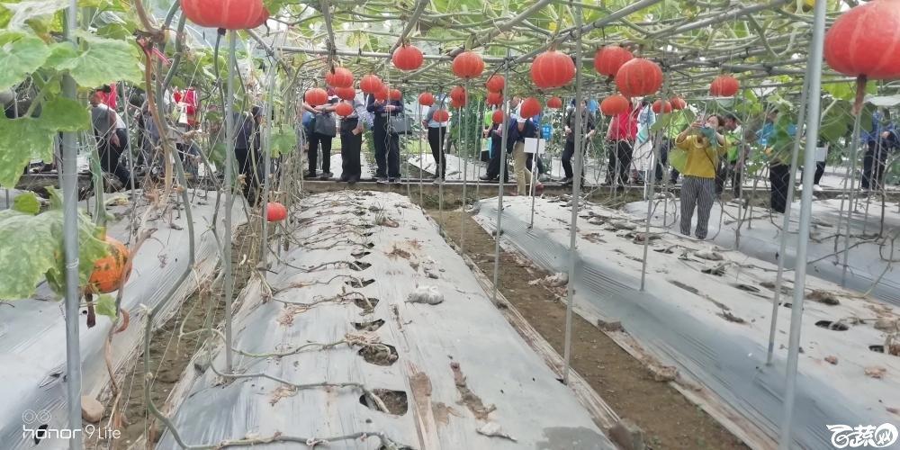 2018梅州蔬菜良种良法展示观摩培训会-瓜类-004.JPG
