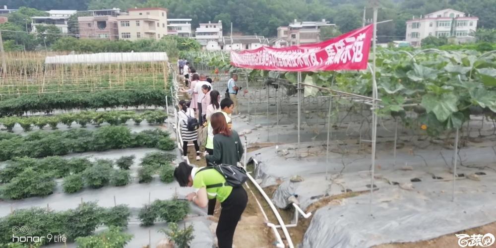 2018梅州蔬菜良种良法展示观摩培训会-其它-014.JPG