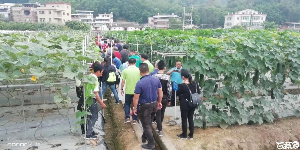 2018梅州蔬菜良种良法展示观摩培训会-其它-016.JPG