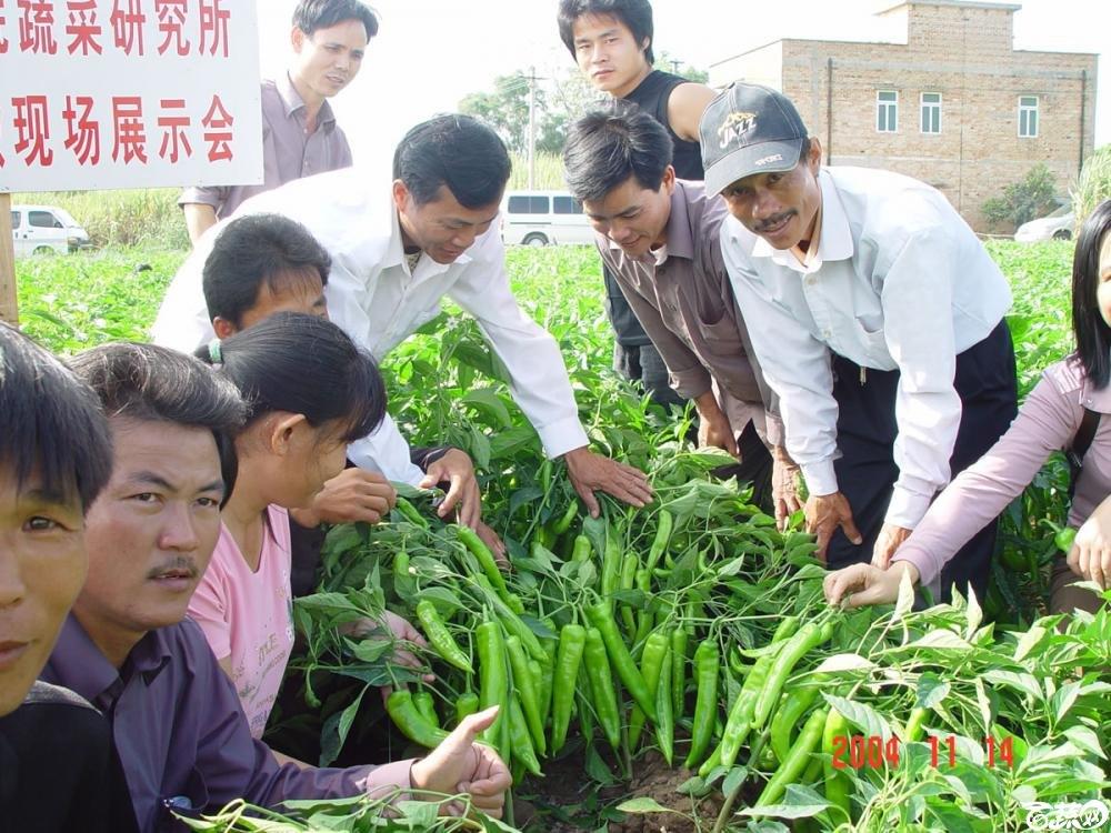 广东省农科院蔬菜研究所福康5号辣椒2004年和2005年在湛江遂溪召开现场展示会_019.jpg