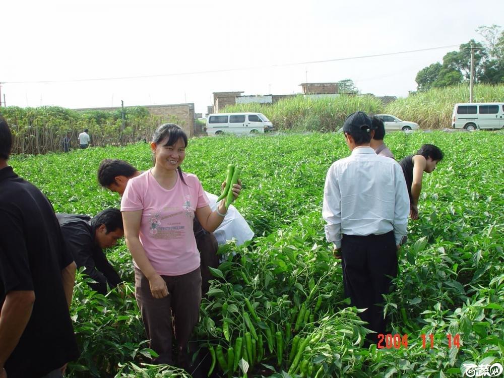 广东省农科院蔬菜研究所福康5号辣椒2004年和2005年在湛江遂溪召开现场展示会_020.jpg