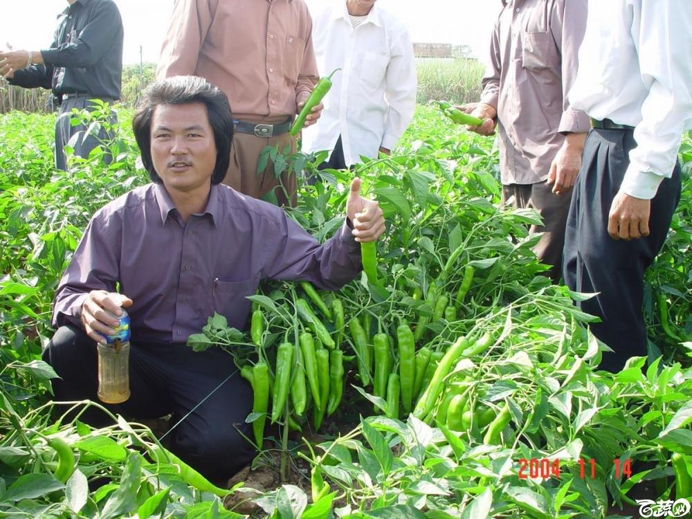 广东省农科院蔬菜研究所福康5号辣椒2004年和2005年在湛江遂溪召开现场展示会_024.jpg