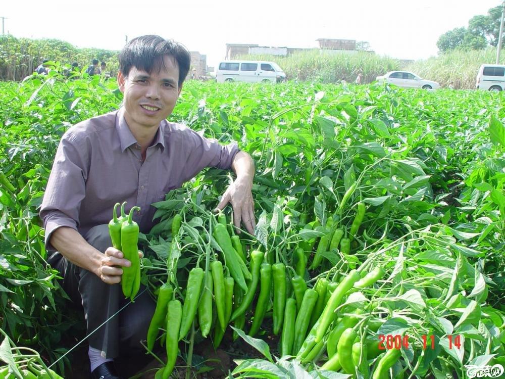 广东省农科院蔬菜研究所福康5号辣椒2004年和2005年在湛江遂溪召开现场展示会_039.jpg