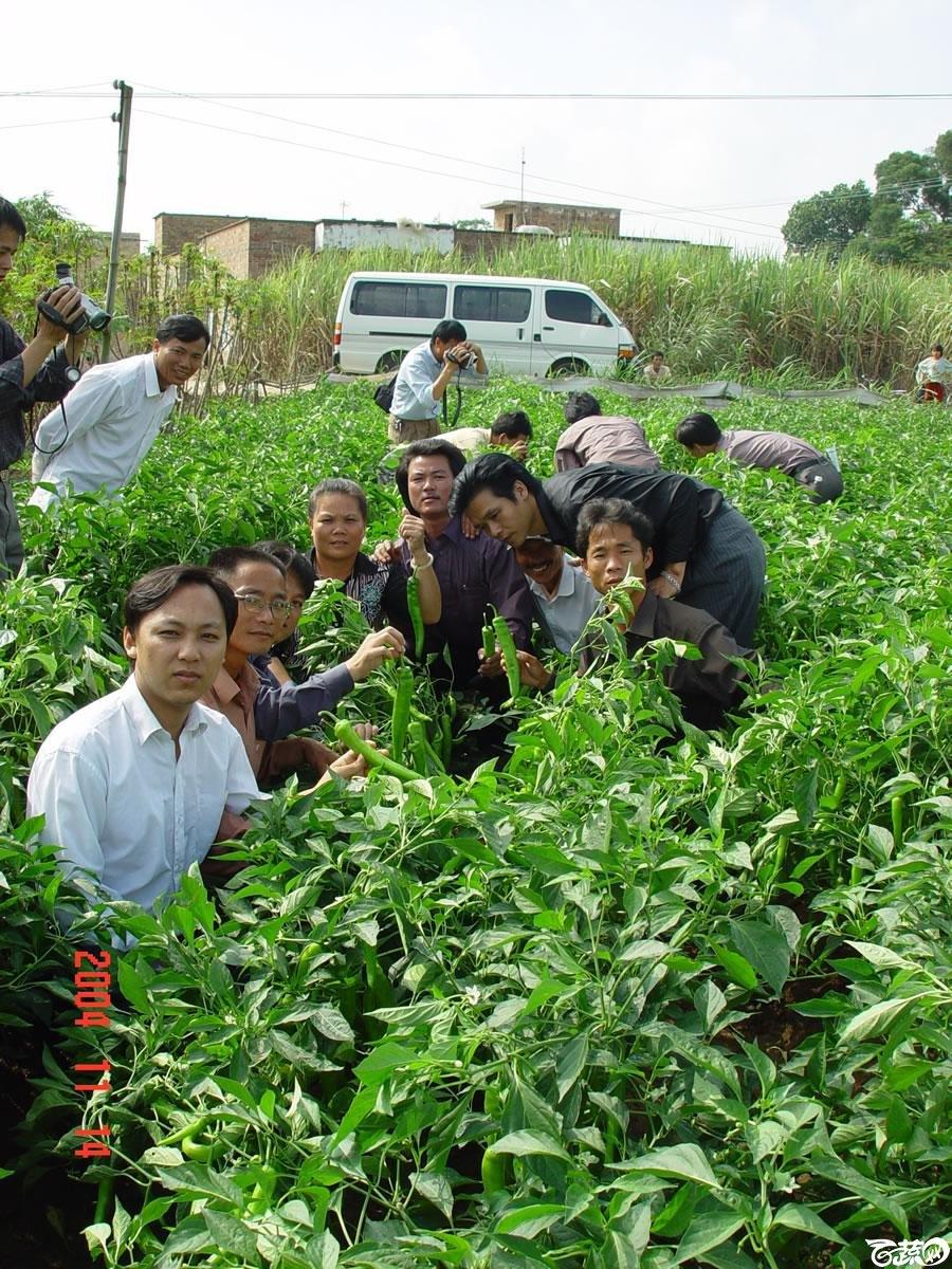 广东省农科院蔬菜研究所福康5号辣椒2004年和2005年在湛江遂溪召开现场展示会_041.jpg