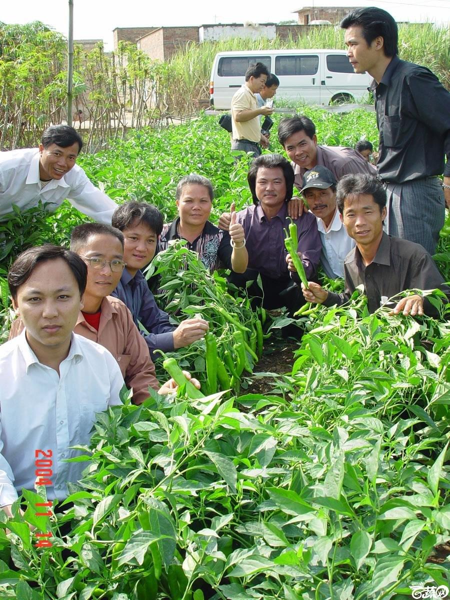 广东省农科院蔬菜研究所福康5号辣椒2004年和2005年在湛江遂溪召开现场展示会_043.jpg