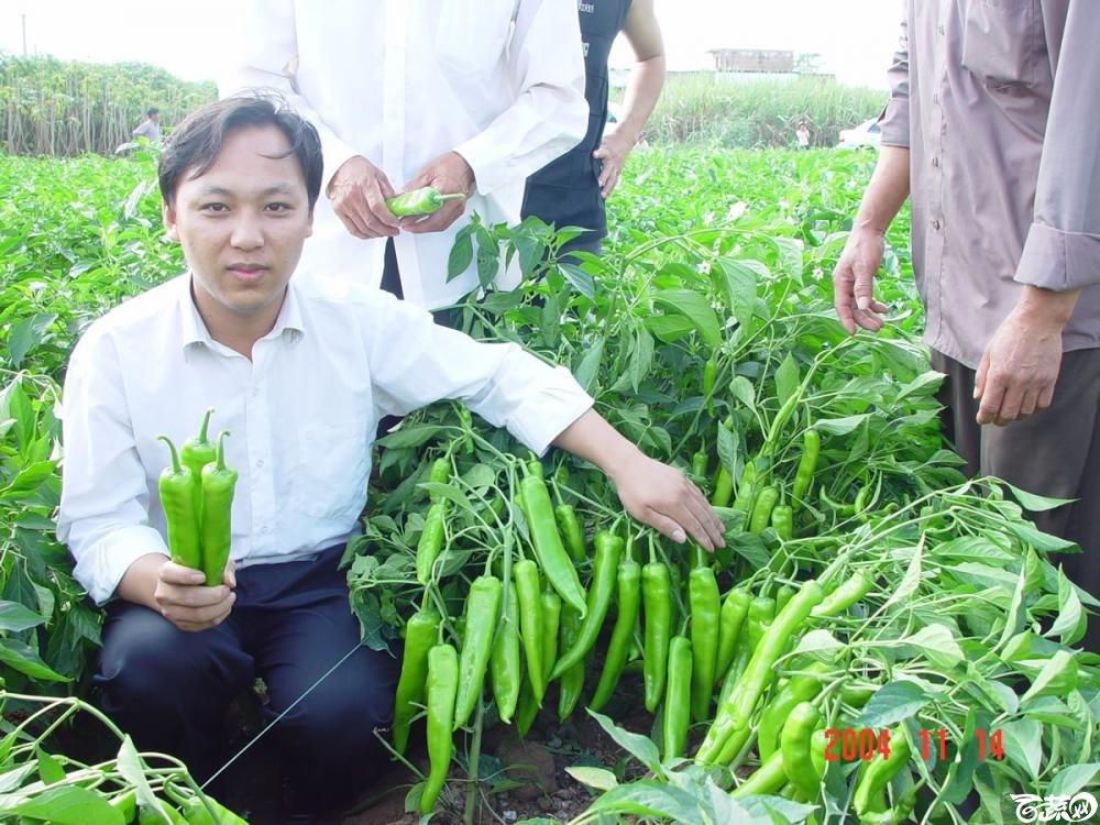 广东省农科院蔬菜研究所福康5号辣椒2004年和2005年在湛江遂溪召开现场展示会_048.jpg