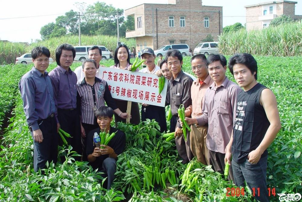 广东省农科院蔬菜研究所福康5号辣椒2004年和2005年在湛江遂溪召开现场展示会_053.jpg