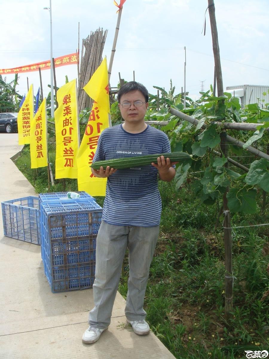 广东农科院蔬菜研究所雅绿六号丝瓜_009.jpg