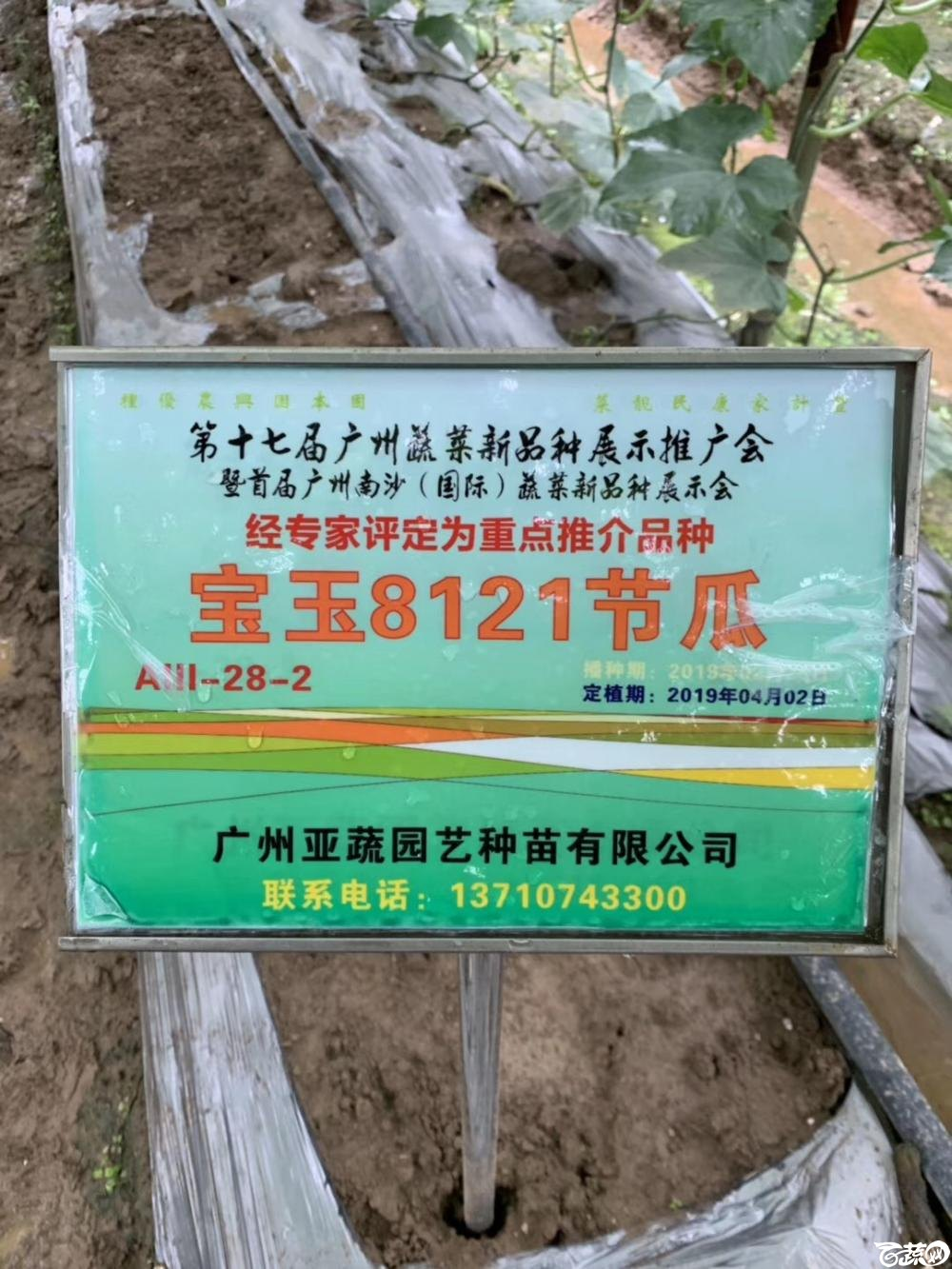 第十七届广州市蔬菜新品种展示推广会,专家重点推介品种,宝玉8121节瓜IMG 6815.JPG