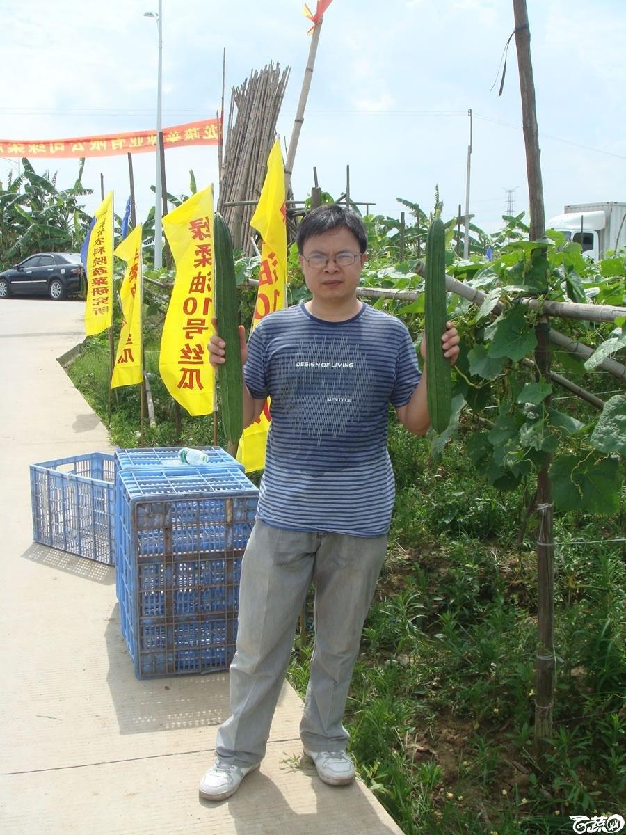 广东农科院蔬菜研究所雅绿六号丝瓜_008.jpg