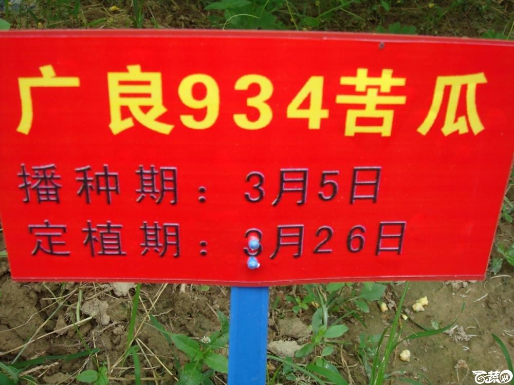 广良934苦瓜_001.jpg
