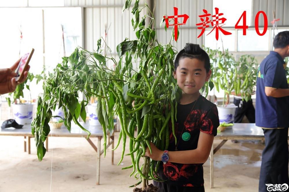 中农福得系列优良蔬菜品种田间展示种植表现_001.jpg