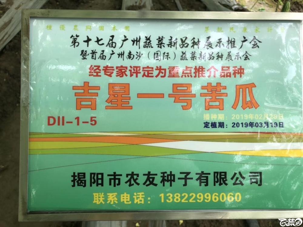 第十七届广州市蔬菜新品种展示推广会,专家重点推介品种,吉星一号苦瓜 001.JPG